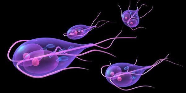 паразиты лямблии