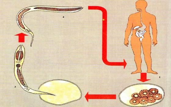 передача паразитов