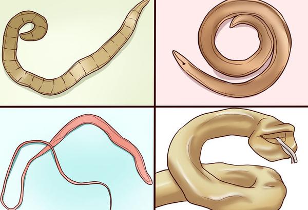 паразиты