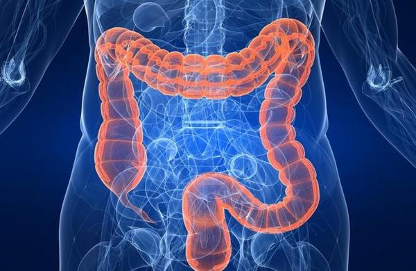 среда обитаний паразитов - кишечник