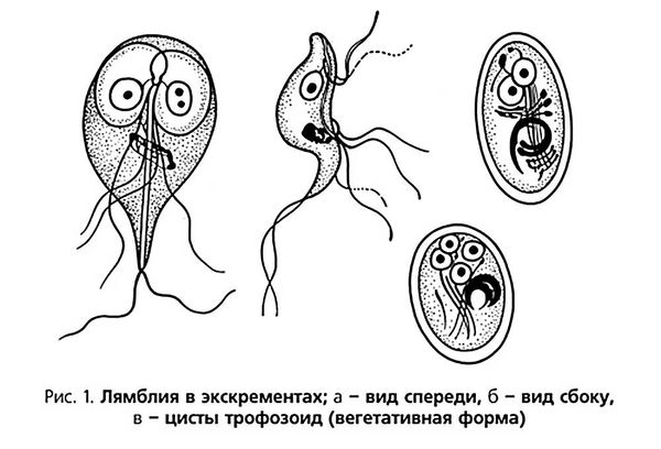 патогенез лямблиоза
