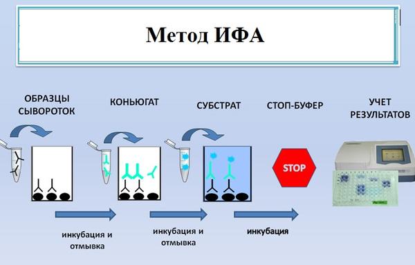 Иммунологический метод – ИФА