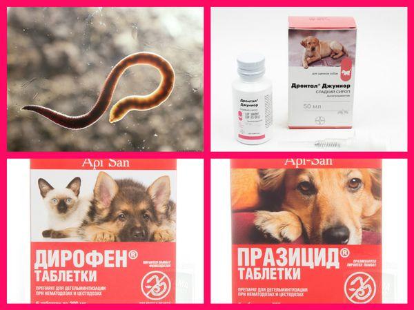 лечение животных от паразитов