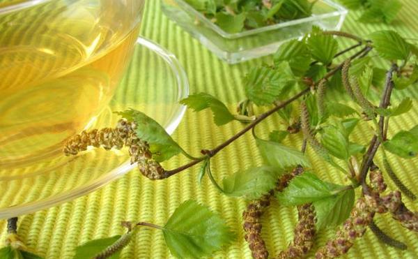 Отвар из листьев березы от паразитов