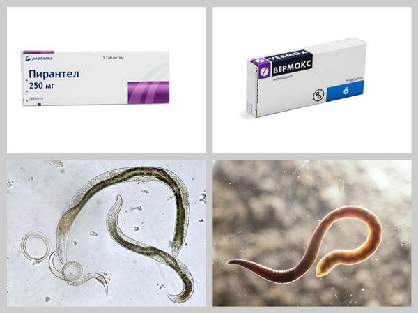 Препараты против гельминтов