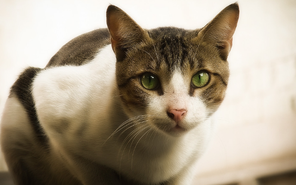 кошки подвержены различным заболеваниям
