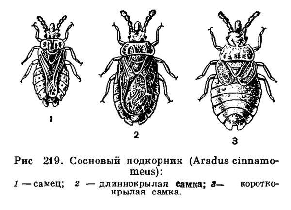 Отряд Полужесткокрылые или Клопы (Hemiptera)