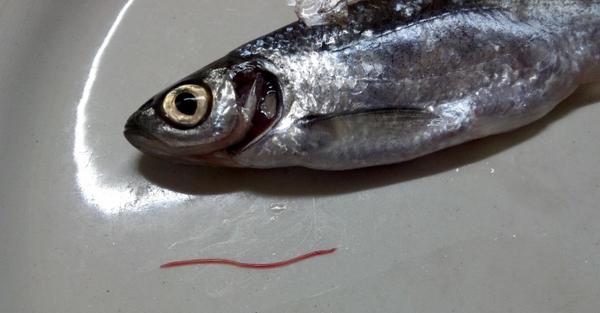 Паразиты рыб