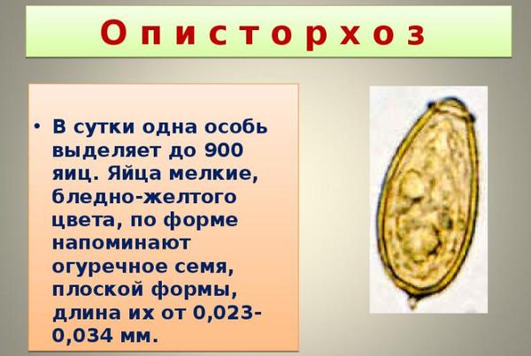 Паразитарные заболевания печени