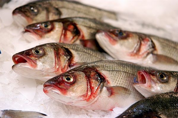 Рыба с паразитами