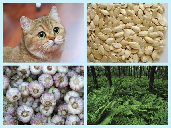 чеснок, семена тыквы, папоротник отпаразитов