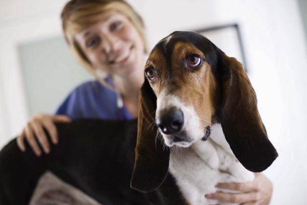 Возбудитель хламидиоза у собак