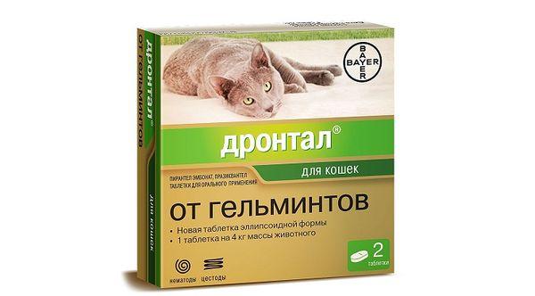 Дронтал от гельминтов у котят