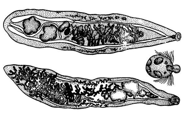 Паразиты в организме