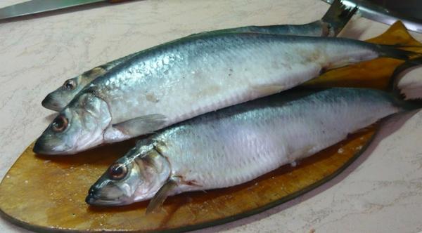 Паразиты в рыбе Дифиллоботриоз