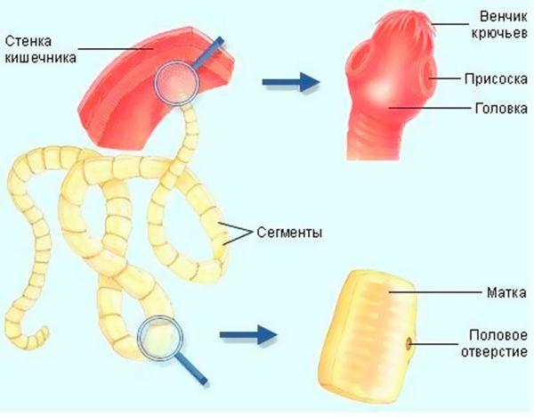 Клинические симптомы заболевания спарганоз