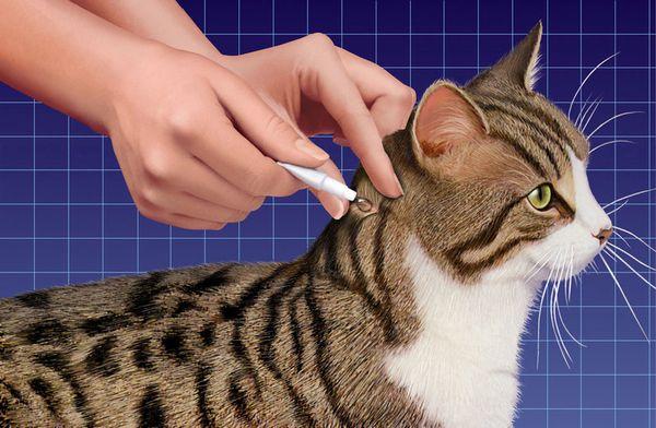 Методика нанесения препарата