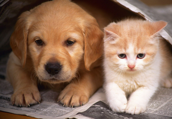 Препараты для кошек и собак
