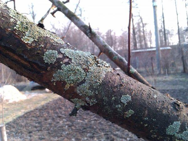 грибы паразиты на дереве