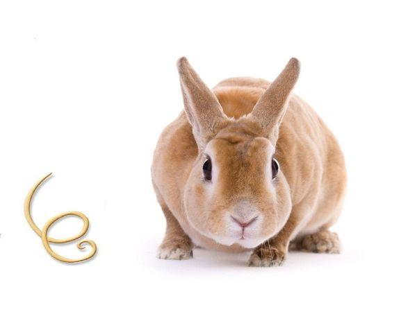 кролик и паразиты