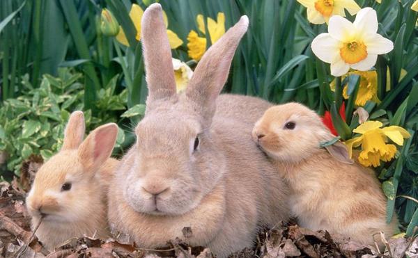 лечение кроликов от паразитов