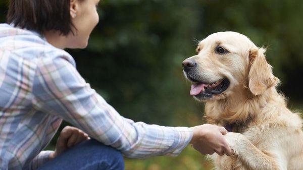 хозяин с собакой