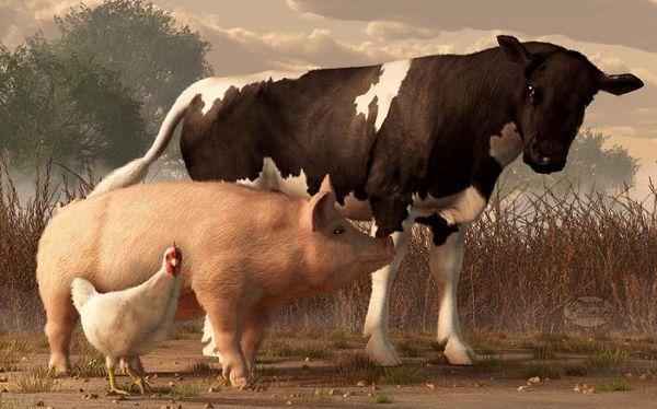 заражение паразитами от домашнего скота