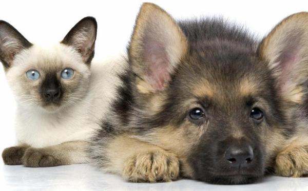 паразиты у ссобак и кошек