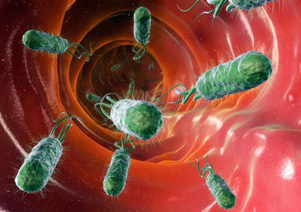 Микробы в организме человека