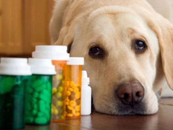 лечение собак от глистов