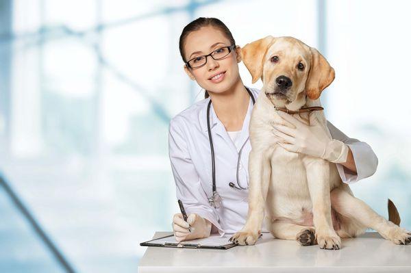 лечение собак от паразитов