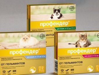 Не допускайте появления глистов у кошек — применяйте капли