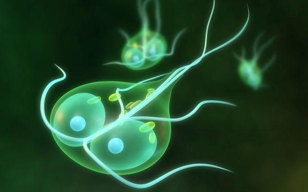 Лямблиоз - протозойная инвазия