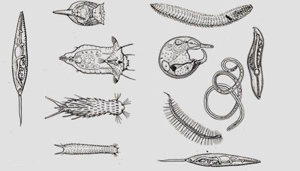 какие паразиты живут в теле человека