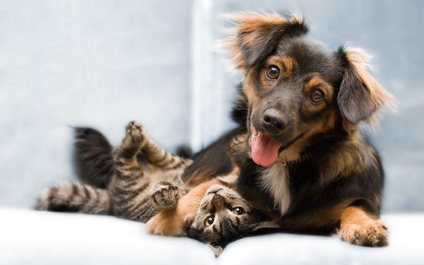 лечение кошек и собак от глистов