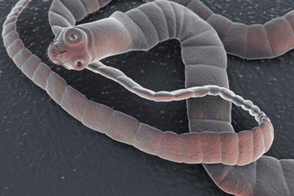 ленточный червь в рыбе