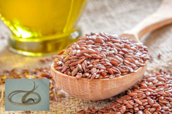 Польза семени льна для паразитов