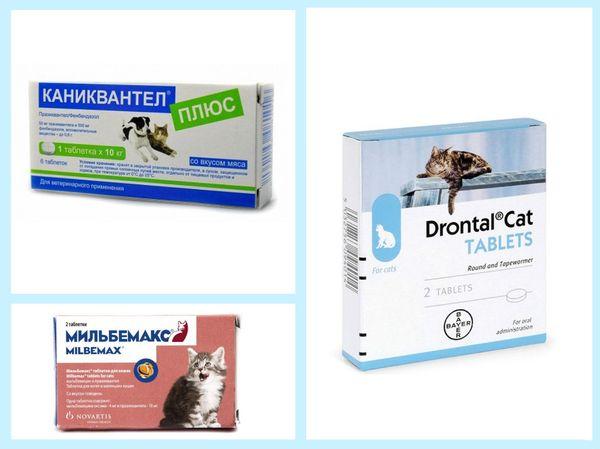 Препараты от паразитов у животных
