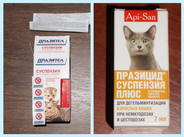 Как вылечить у кошек глистов в домашних условиях