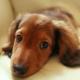 Симптомы поражения и помощь при хламидиозе у собак и других животных