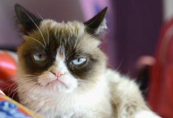 Глистная инвазия у кошек: симптоматика и лечение