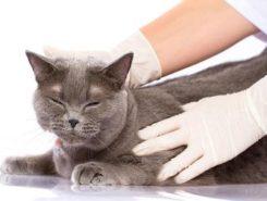 Глисты у кошек: симптомы, профилактика