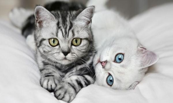 Опасные для людей кошачьи паразиты