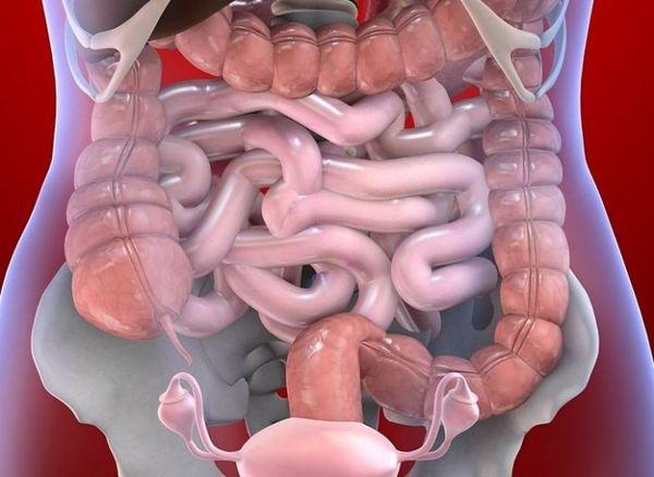 Лечение глистов желудочно-кишечного тракта