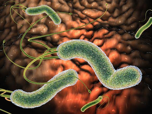 Как передаются паразиты от животных и предметов быта