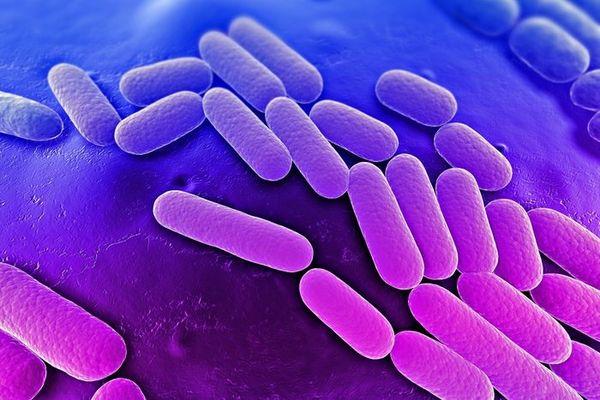 Бактерия клебсиелла