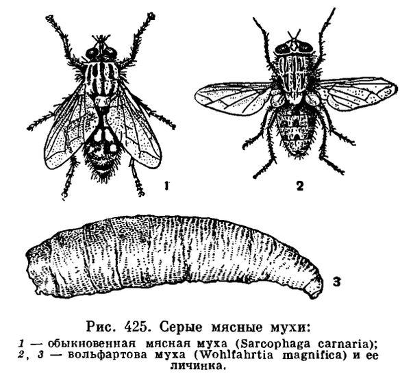 паразитарные болезни из группы энтомозов