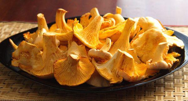 Лечение описторхоза при помощи грибов