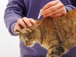 Противопаразитарные обработки для животных