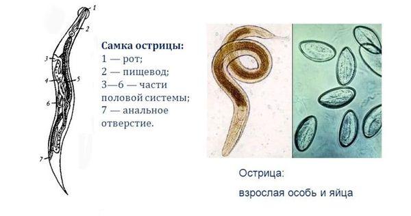 Профилактика паразитарных заболеваний